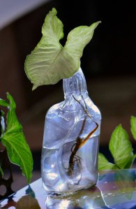 bottle planter INR 800