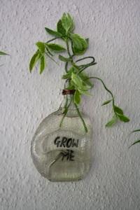bottle planter INR 800