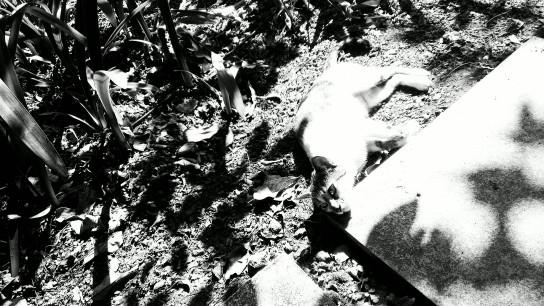 lazy cat in sun