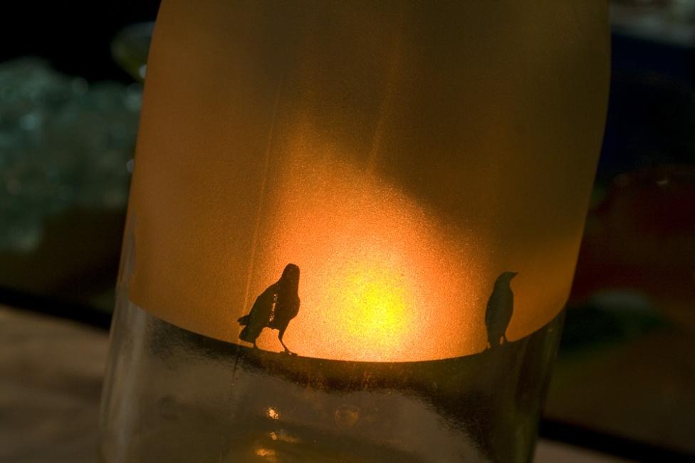 hanging shadows birds1