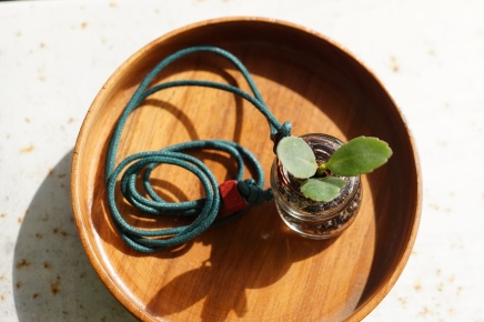 wonky bottle locket planter
